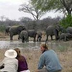 ‪Transfrontiers Wildlife Walking Safaris‬