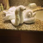  Towel animals greet you