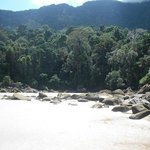  view of jungle from second beach