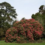  Private gardens with beautiful Rhodadendrons