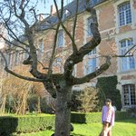 Tree with Chateau