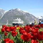 tulips from holland also in norway