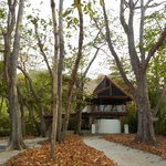 View of the honeymoon suite, in trees off beach