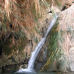 Nachal David Stream