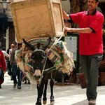 MEDINA TRANSPORT BY DONKEY