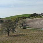 AronHill Vineyards