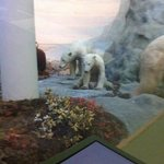 polar bears in the diorama