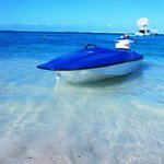 Weiler Caribbean Sea - Diving in Bayahibe Private Tours