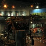 Museo de las Aves
