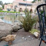 More ducks appeared by our table waiting for table scraps
