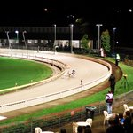 Wentworth Park Greyhound Racing