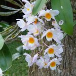  Orchideen im Garten