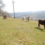 Foto van Happy Donkey Hill Bed and Breakfast / Holiday Cottages