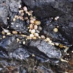  Beautiful snails on the rocks