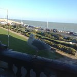  Seagull who visited every morning.