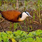 Jacana  Africa Day Tours