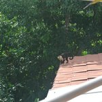  A monkey who visited next door