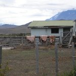 Ranch grounds of the estancia Tercera Barranca