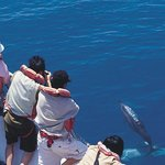 ‪Whale Watching-Whale Watching Tour‬