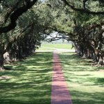  Alley of Oaks
