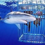Shark Cage Diving Tours