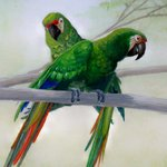 The Great Green Macaw Sanctuary