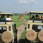 'Africa Tried and Tested' safari in Tarangire