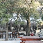 Elephants in our garden