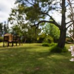Coral Tree Cottages Foto