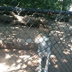  Wolf Exhibit
