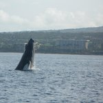 Whale watching with Captain Steve out of Lahaina