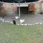 The chicken run at the back of the garden