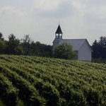 Markko Vineyard