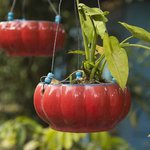  Colourful glazed planters for sale in the garden