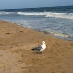  Seagull Stroll