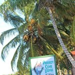 Coconut trees really do grow on the beach in paradise.