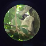  Sloth in Manuel Antonio Park