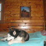 Duke inside cabin 9