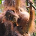 Sumatra Travel - Day Tours