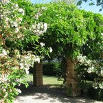  Wisteria Arch Way