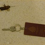  Woke up to this semi-dead large cockroach in our room!
