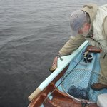 Lough Corrib brown trout caught and released
