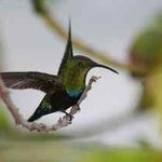  Guests love to watch our resident hummingbirds on our gallery, and in our avocado tree