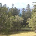 Photo de Ponderosa Norfolk Island