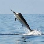 Pisces Dive Charter & Tented Retreat