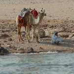  Camel guy on beach (sits just outside boundary of private beach).