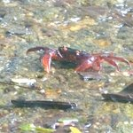  Crab at Waterfall