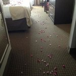 Bilde fra Holiday Inn Express & Suites Denton - UNT - TWU