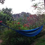 relaxing hammocks invite you to relax! pure vida!