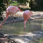 Not Flamingos.